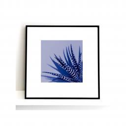 zeb-blue.jpg