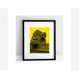 yellow-lion.jpg