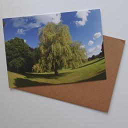 h-summer-tree.jpg