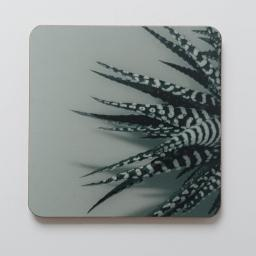 zebra-aloe-green.jpg
