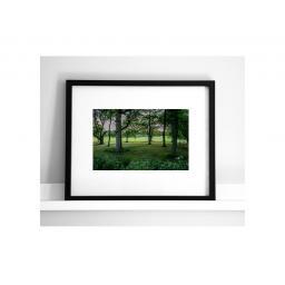 horsforth-trees-2.jpg