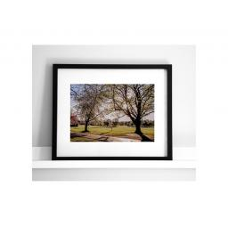 horsforth-blossom-tree.jpg