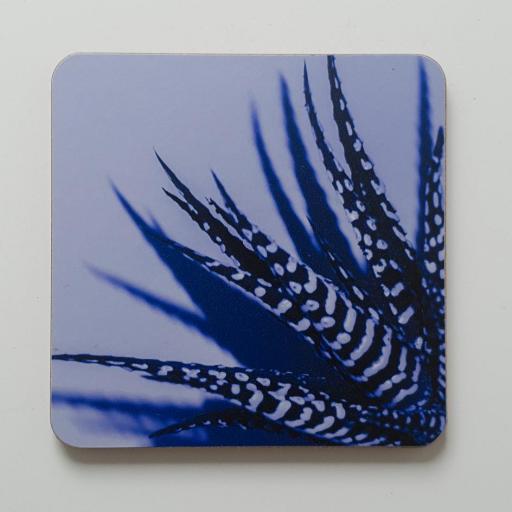 zebra-aloe-blue.jpg