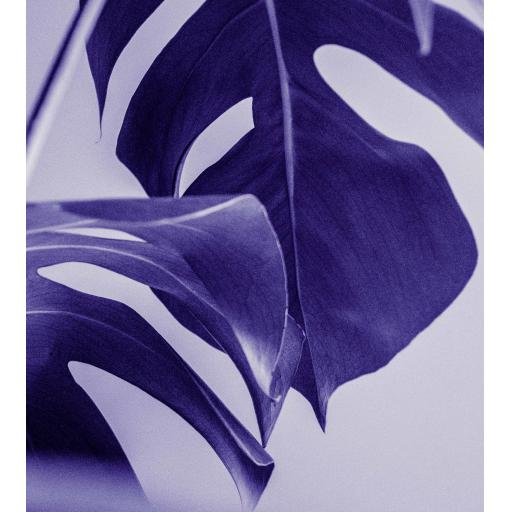 Monstera Plant Purple print