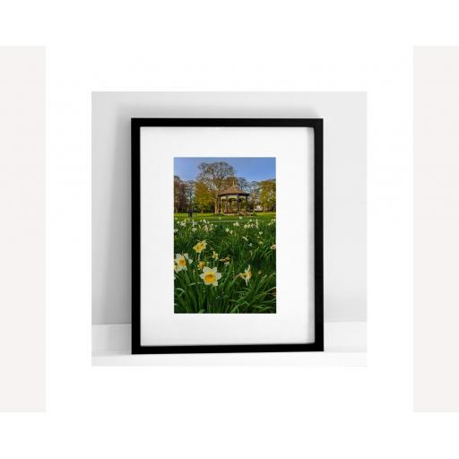 colour-daffodils.jpg