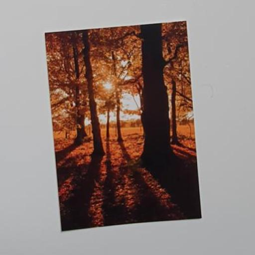 Golden Acre Autumn Trees postcard