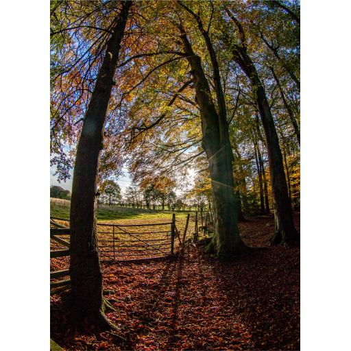 Autumn Fence Art Print, Golden Acre Park