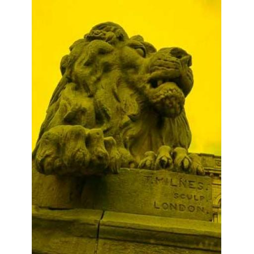 Salts Lion Yellow print