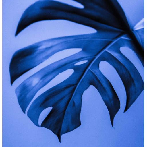 Monstera Plant Blue Square print