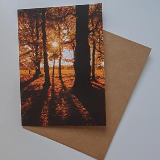 Golden Acre Trees Autumn card