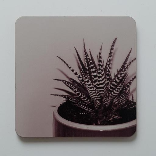 Zebra Aloe Pink coaster