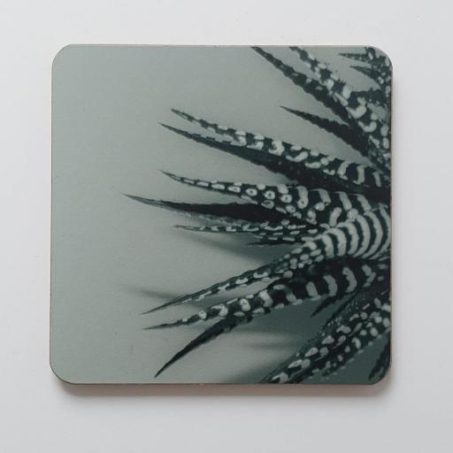 Zebra Aloe Green coaster