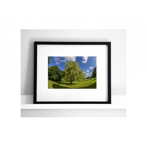 horsforth-summer-tree.jpg