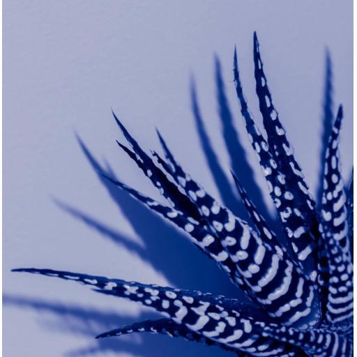 Zebra Aloe Blue print