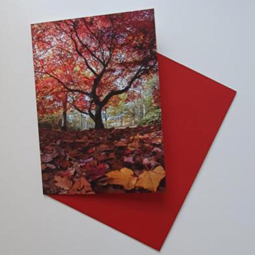 Red Tree Golden Acre Park art card