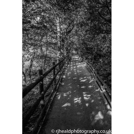 Golden Acre park shadow print