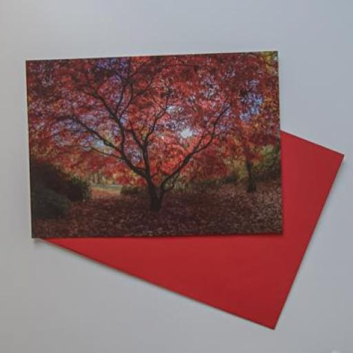 Red tree landscape card