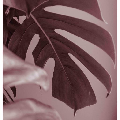 Monstera Plant Pink print