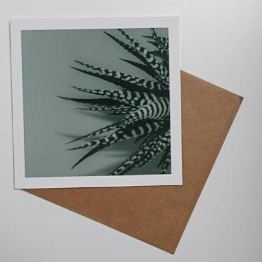 Zebra Aloe Green Art card