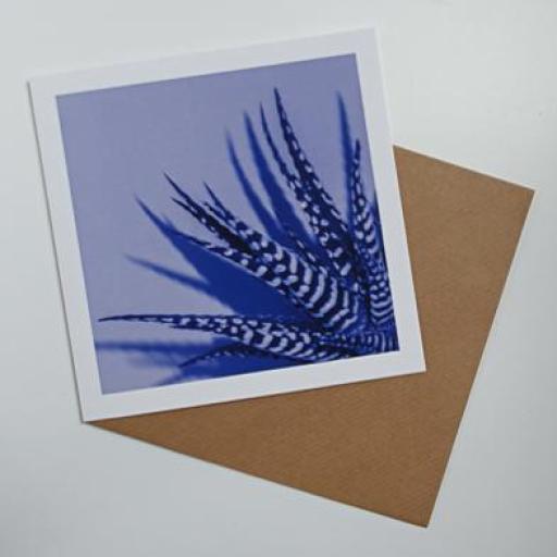 Zebra Aloe Blue Art card