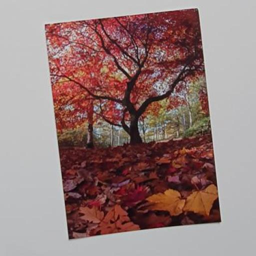 Red tree, Golden Acre Park postcard