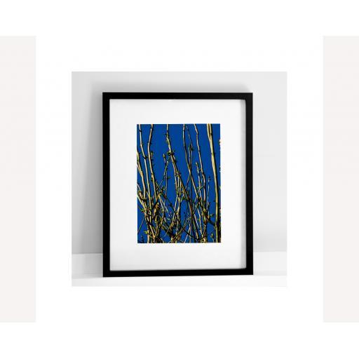 Goldfinch blue.jpg