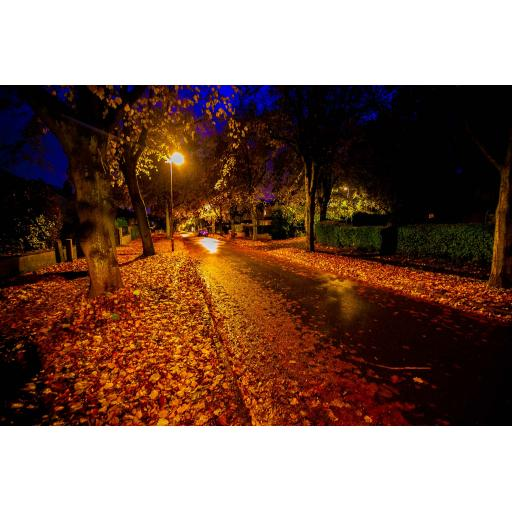 Stanhope Drive Autumn night