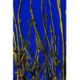 Goldfinch blue 15x10.jpg