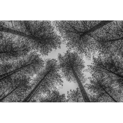 Newborough Forest